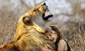 synapsis lion